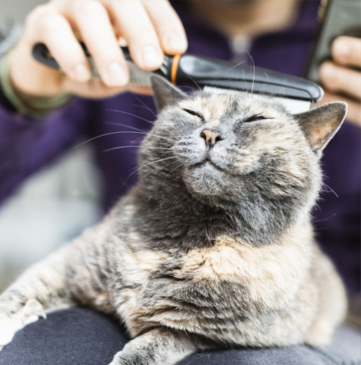 Cat being brushed during grooming