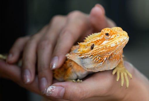 Woman holding a pet lizard