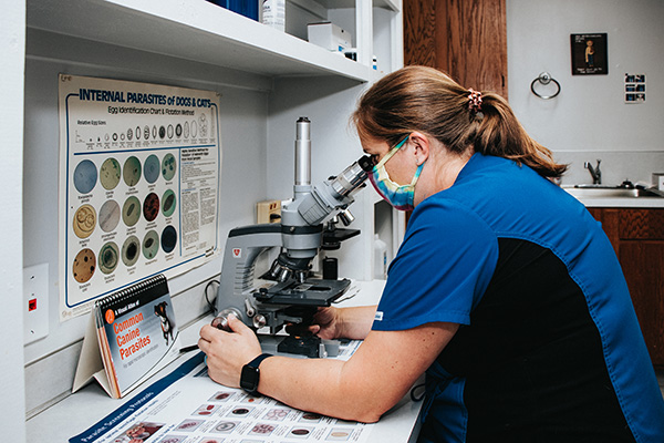 woman using a microscope to view a slide