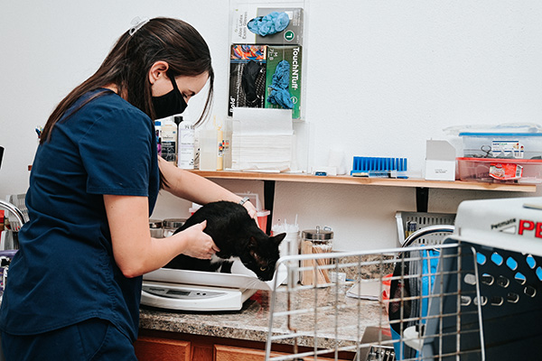 vet tech working with a cat